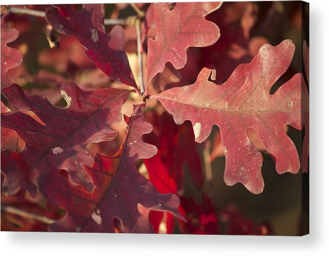Leaves Acrylic Print featuring the photograph Autumn Is When Every Leaf Is A Flower by Jeannette Cruz