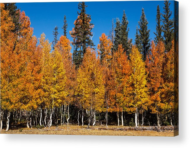 James Marvin Phelps Photography Acrylic Print featuring the photograph Autumn Palette  by James Marvin Phelps