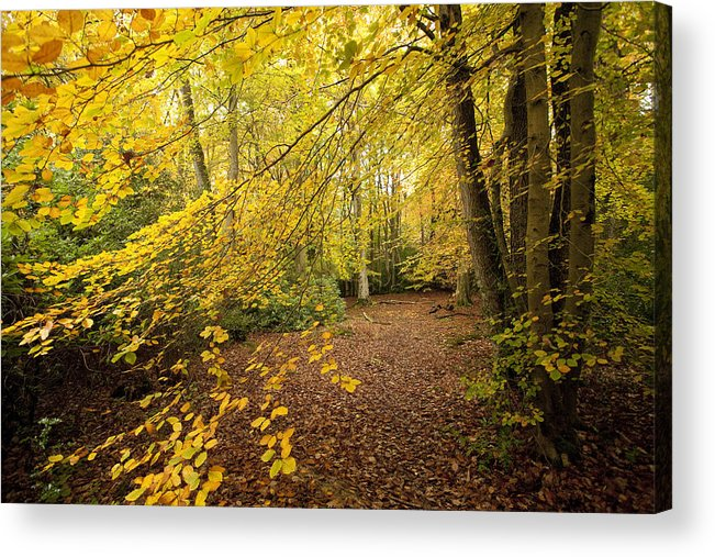 Autumn Acrylic Print featuring the photograph Autumnal Woodland II by Natalie Kinnear