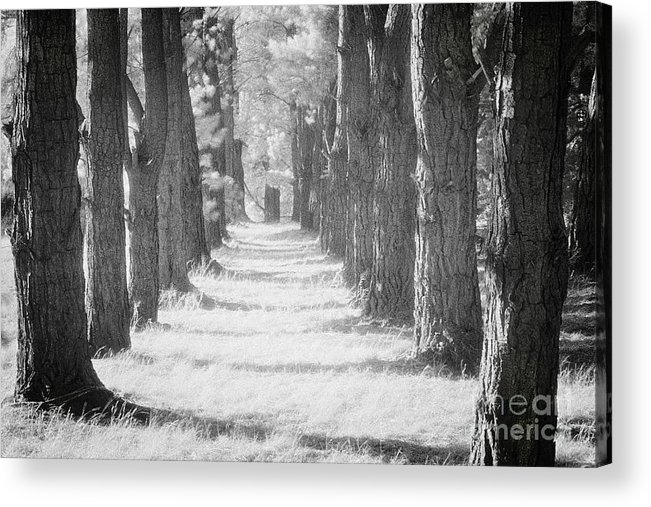 Avenue Acrylic Print featuring the photograph Avenue Of Trees New Zealand by Colin and Linda McKie