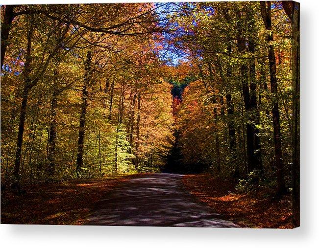 Autumn Acrylic Print featuring the photograph Backlit Canopy by Larry Landolfi