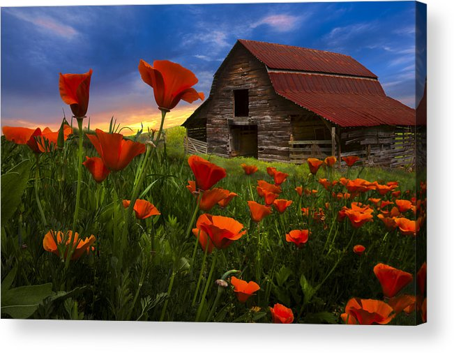 American Acrylic Print featuring the photograph Barn In Poppies by Debra and Dave Vanderlaan