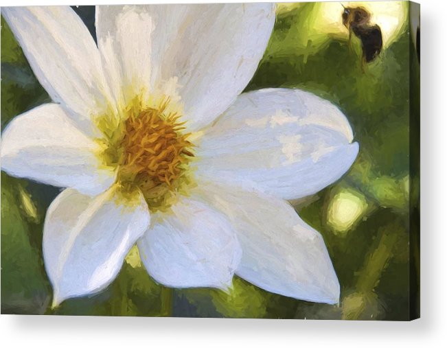 Bartrams Garden Acrylic Print featuring the photograph Bartram Bee Flying by Alice Gipson