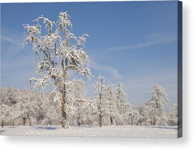 Winter Acrylic Print featuring the photograph Beautiful Winter Day With Snow Covered Trees And Blue Sky by Matthias Hauser