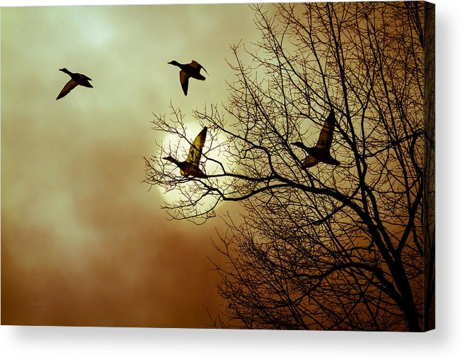 Duck Acrylic Print featuring the photograph Before A Winter Sky by Bob Orsillo