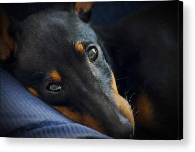 Puppy Acrylic Print featuring the photograph Best Friend by Aged Pixel