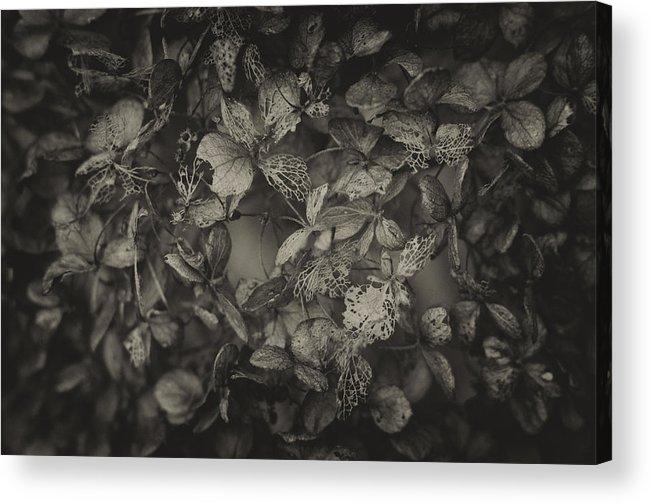 Foliage Acrylic Print featuring the photograph Between Death And Life by Deividas Kavoliunas