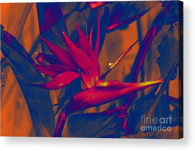 Bird Of Paradise Acrylic Print featuring the photograph Bird Of Paradise Flower by Susanne Van Hulst