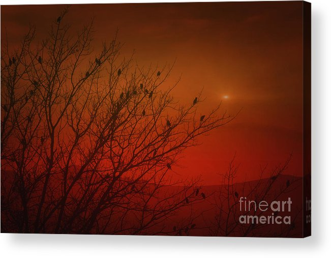 Nature Acrylic Print featuring the photograph Birds At Sunset by Tom York Images