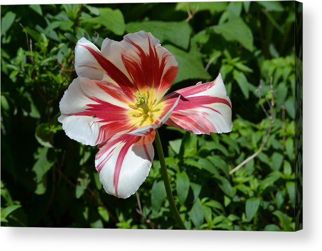 Flower Acrylic Print featuring the photograph Bloom by Tara Potts