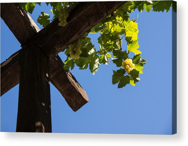 Harvest Acrylic Print featuring the photograph Blue Sky Grape Harvest - Thinking Of Fine Wine by Georgia Mizuleva