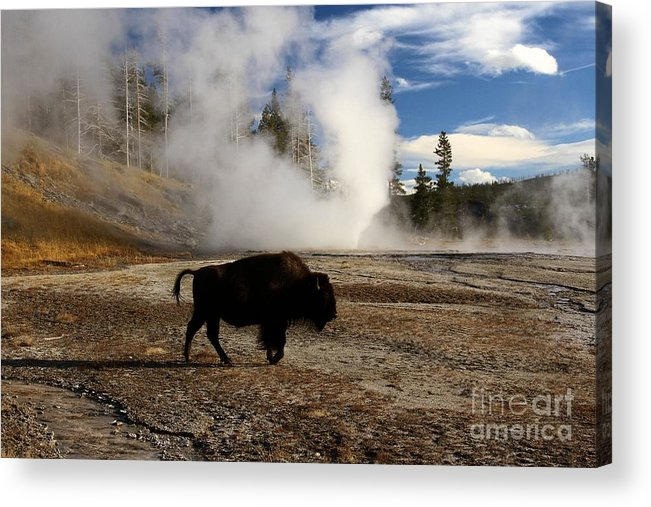 Vent Geyser Acrylic Print featuring the photograph Breaking The Rules by Adam Jewell
