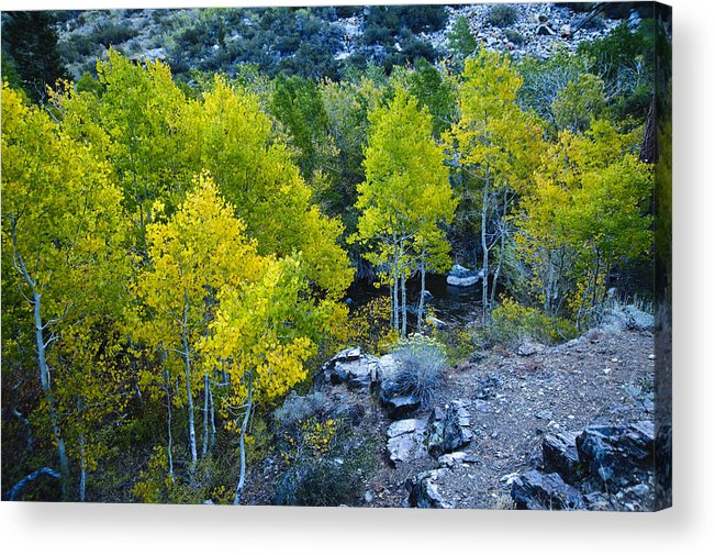Fall Color Acrylic Print featuring the photograph Brilliant Fall Color by Glen Wilkerson