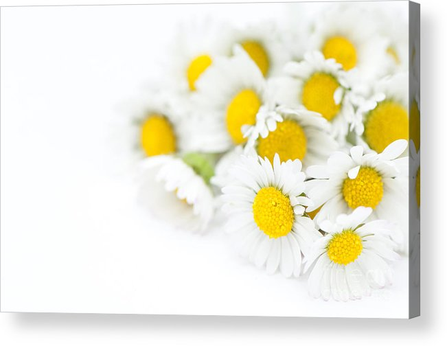 Floral Acrylic Print featuring the photograph Bunch Of Daisies by Anne Gilbert
