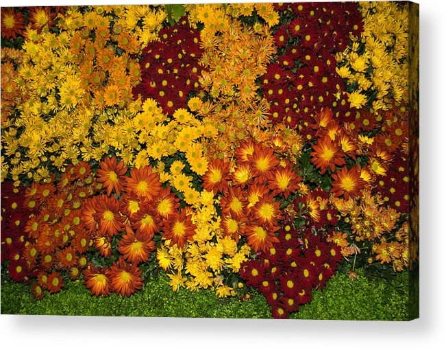 Bunches Acrylic Print featuring the photograph Bunches Of Yellow Copper Orange Red Maroon - Hot Autumn Abundance by Georgia Mizuleva
