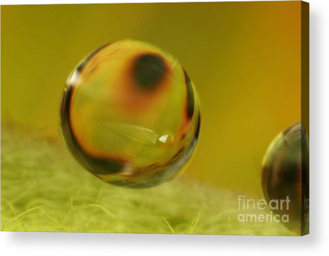 Raindrop Acrylic Print featuring the photograph C Ribet Orbscape 0744 by C Ribet