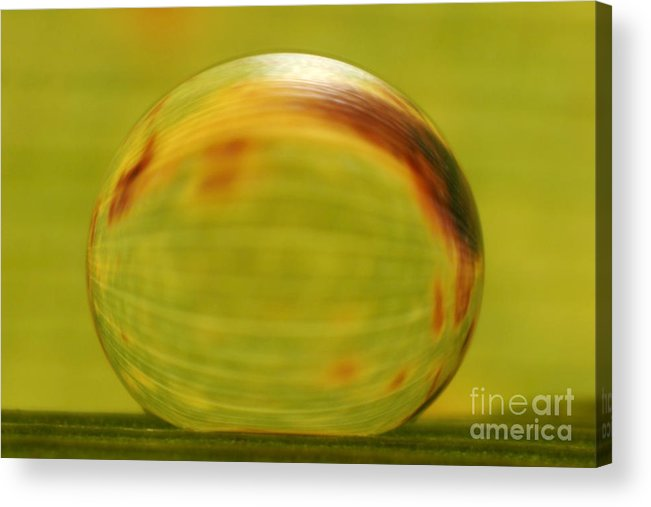 Raindrop Acrylic Print featuring the photograph C Ribet Orbscape 0792 by C Ribet