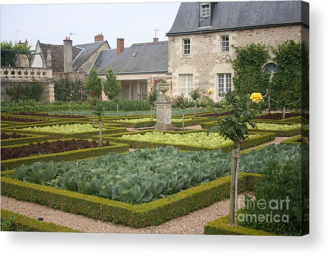 Cabbage Acrylic Print featuring the photograph Cabbage Garden Chateau Villandry by Christiane Schulze Art And Photography