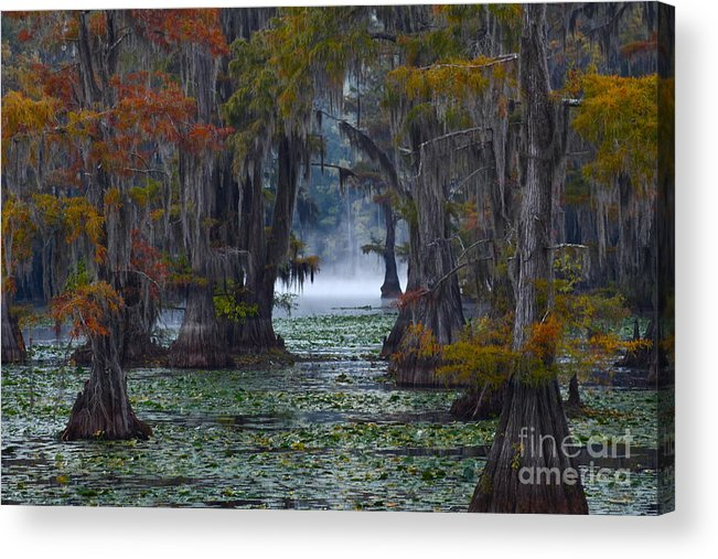 Morning Acrylic Print featuring the photograph Caddo Lake Morning by Snow White