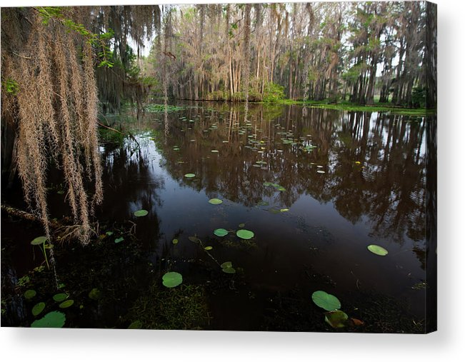 Bald Cypress Acrylic Print featuring the photograph Caddo Lake, Texas's Largest Natural Lake by Larry Ditto