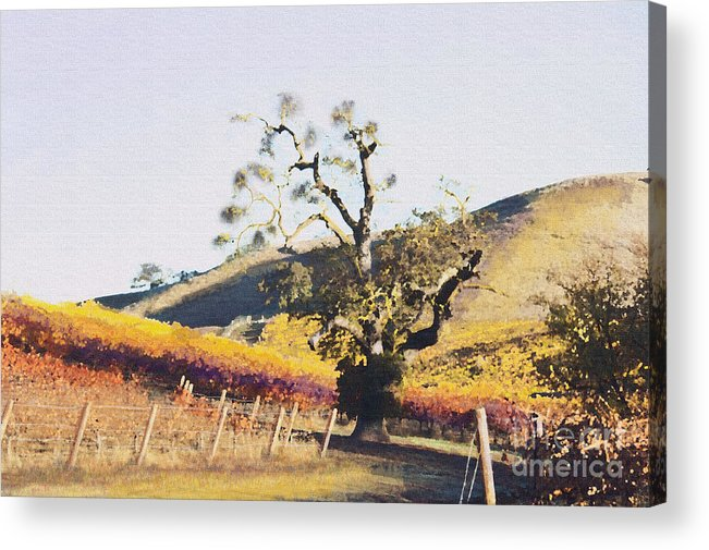 California Wine Country Acrylic Print featuring the painting California Vineyard Series Oaks In The Vineyard by Artist and Photographer Laura Wrede