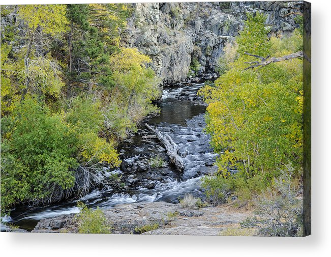 Stream Acrylic Print featuring the photograph Calming Stream by Glen Wilkerson
