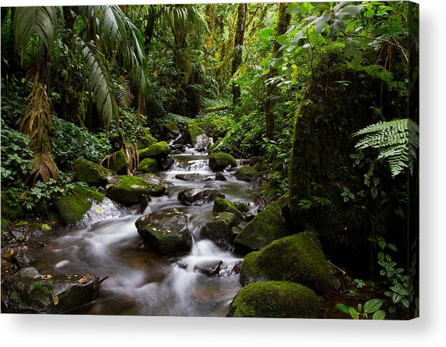 Boquete Acrylic Print featuring the photograph Cascadas Of Boquete by JP Lawrence