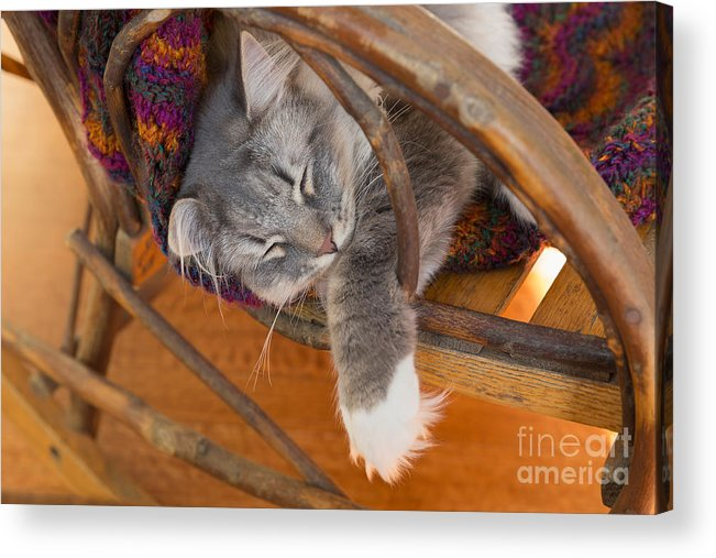 Cat Acrylic Print featuring the photograph Cat Asleep In A Wooden Rocking Chair by Louise Heusinkveld