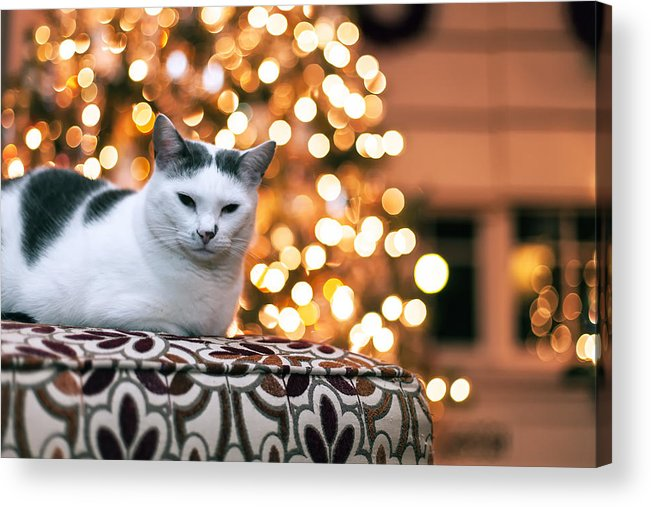 Pet Acrylic Print featuring the photograph Charly And The Xmas Tree by Edward Kreis