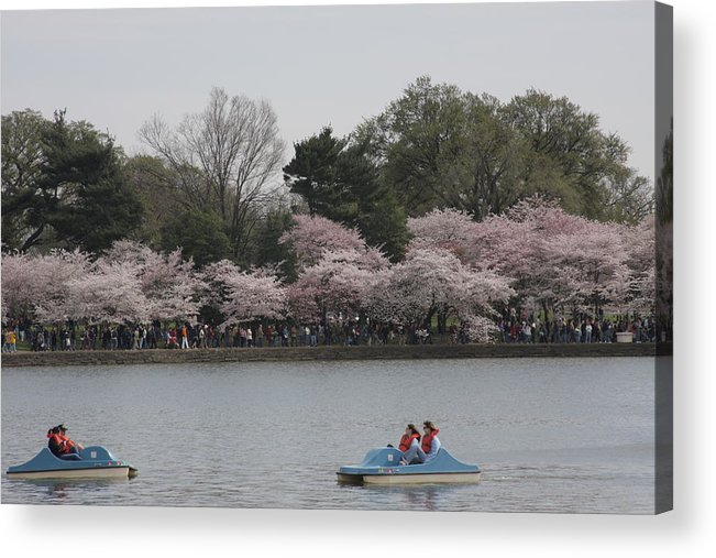 Cherry Acrylic Print featuring the photograph Cherry Blossoms - Washington Dc - 011315 by DC Photographer