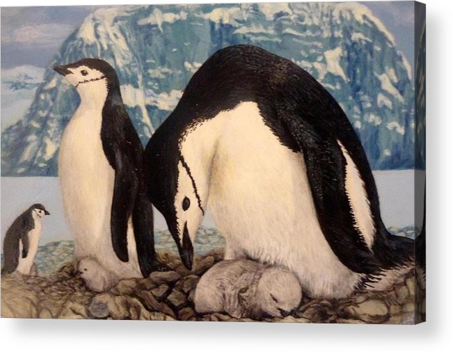 Chinstrap Penguin Acrylic Print featuring the painting Chinstrap Penguin by Ronald Osborne