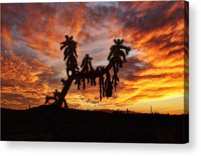Arizona Acrylic Print featuring the photograph Cholla In Flame by Ryan Seek