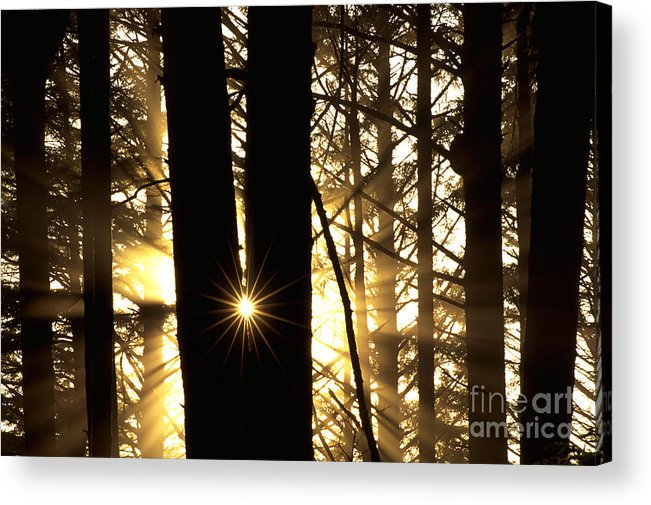 Coastal Forest Acrylic Print featuring the photograph Coastal Forest by Art Wolfe