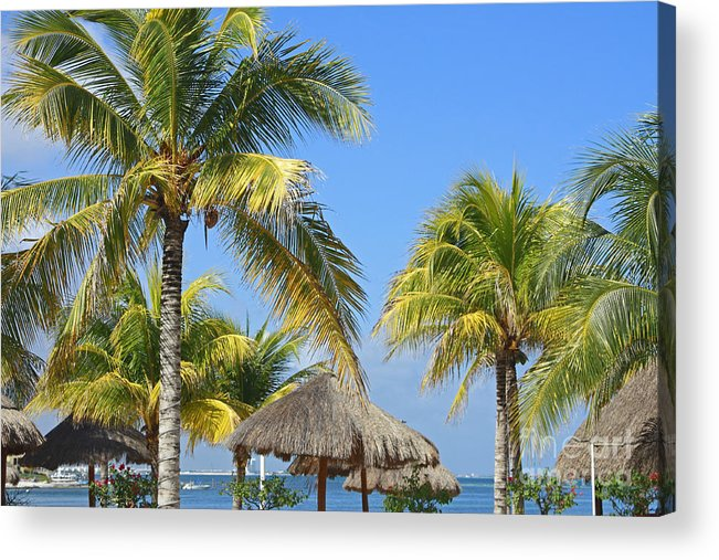Tropical Acrylic Print featuring the photograph Coconut Palm Forest by Charline Xia