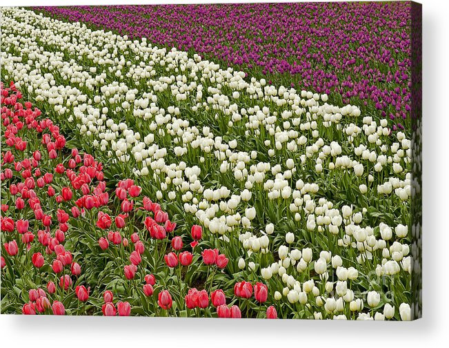 Pacific Acrylic Print featuring the photograph Color Variations by Nick Boren