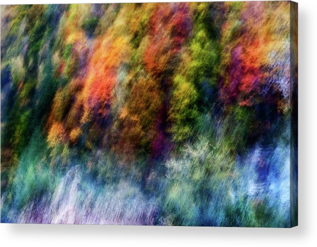 Trees Acrylic Print featuring the photograph Colorful Forest by Wei He