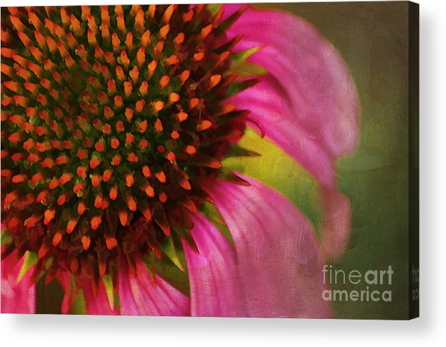 Painterly Acrylic Print featuring the photograph Coneflower by Darren Fisher