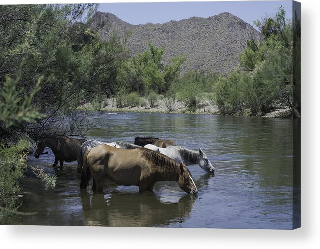 Horses Acrylic Print featuring the photograph Cooling Off by Lorraine Harrington