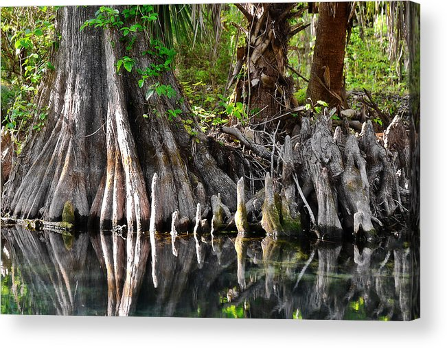 Cypress Acrylic Print featuring the photograph Cypress Trees - Nature's Relics by Christine Till