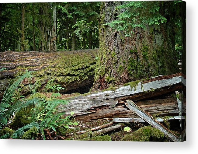 Forests Acrylic Print featuring the digital art Deep In The Forest by Richard Farrington
