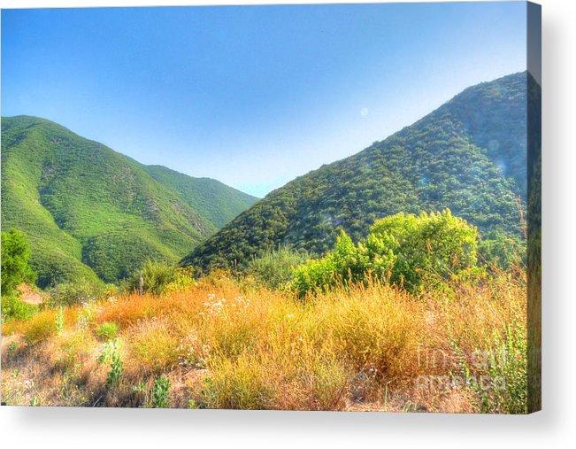 California Acrylic Print featuring the photograph Desert Greens And Yellows by Deborah Smolinske