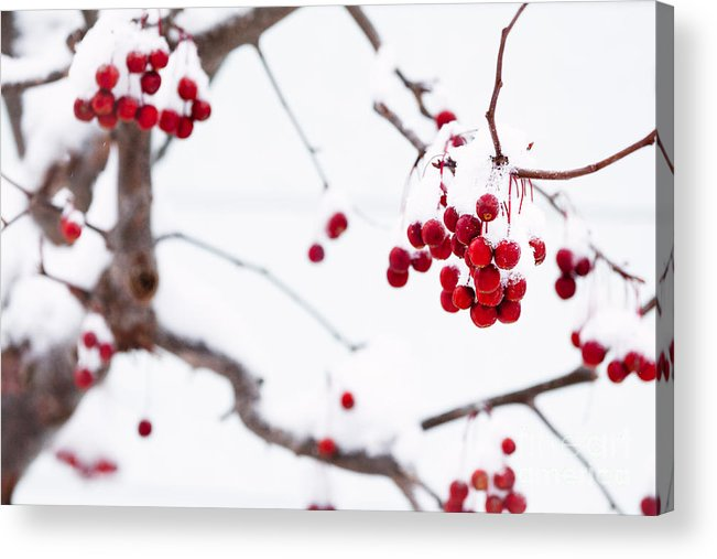 Red Acrylic Print featuring the photograph Dingle Berries II by Mary Smyth