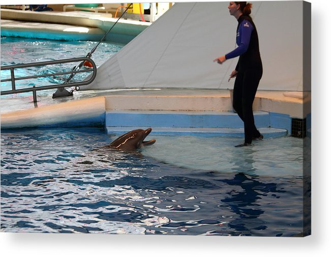 Inner Acrylic Print featuring the photograph Dolphin Show - National Aquarium In Baltimore Md - 1212195 by DC Photographer