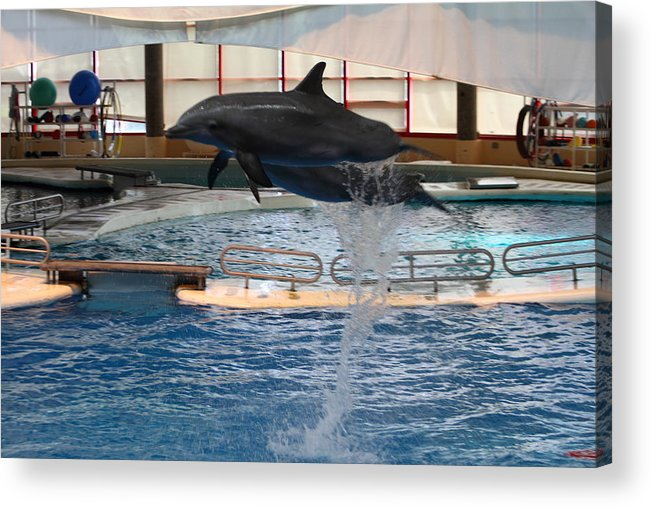 Inner Acrylic Print featuring the photograph Dolphin Show - National Aquarium In Baltimore Md - 1212249 by DC Photographer
