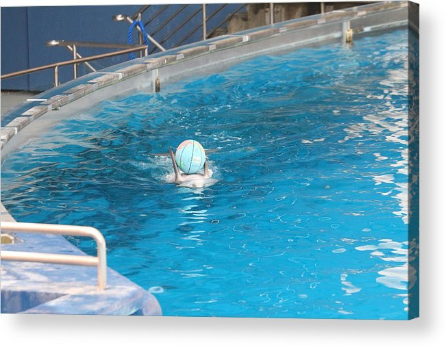 Inner Acrylic Print featuring the photograph Dolphin Show - National Aquarium In Baltimore Md - 121236 by DC Photographer