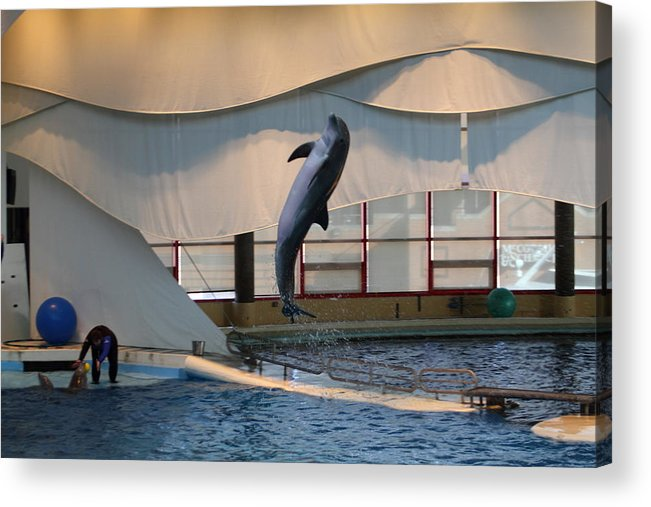Inner Acrylic Print featuring the photograph Dolphin Show - National Aquarium In Baltimore Md - 121255 by DC Photographer