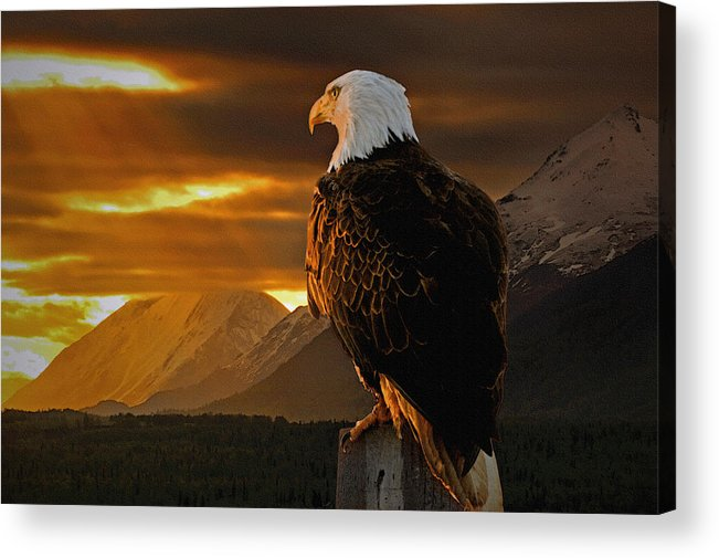 Eagle Acrylic Print featuring the photograph Domain by Ron Day
