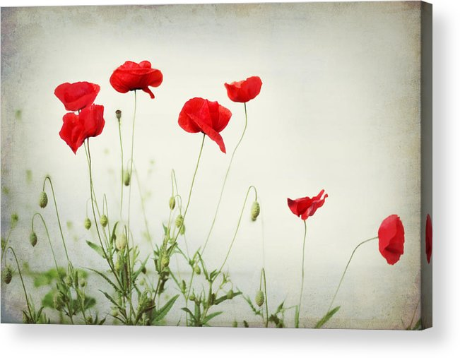 Poppy Acrylic Print featuring the photograph Dorothy by Amy Tyler
