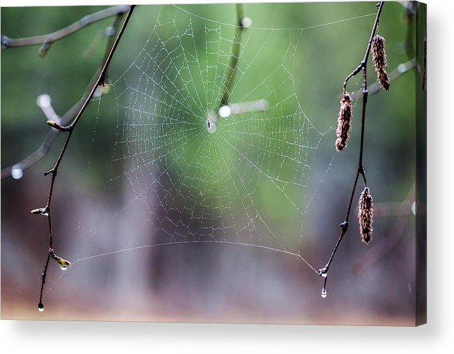 Web Acrylic Print featuring the photograph Dream Catcher by Aaron Aldrich