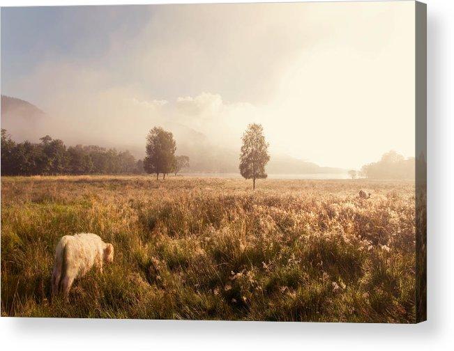 Jenny Rainbow Fine Art Photography Acrylic Print featuring the photograph Dreamy Fields. The Trossachs. Scotland by Jenny Rainbow